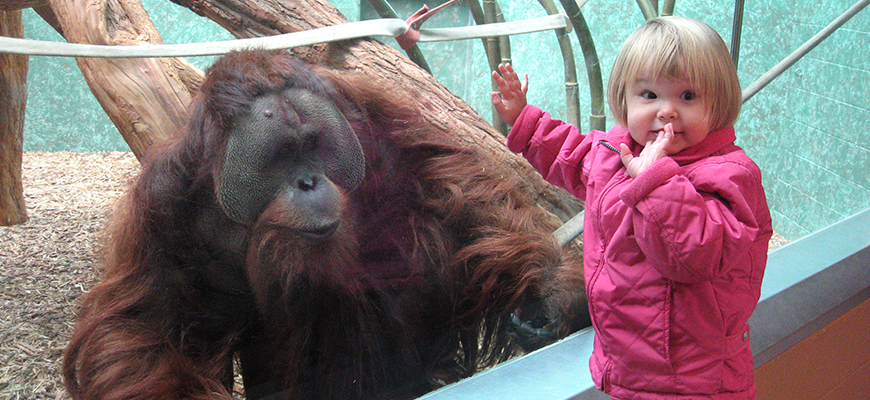 child encounters an orangutan