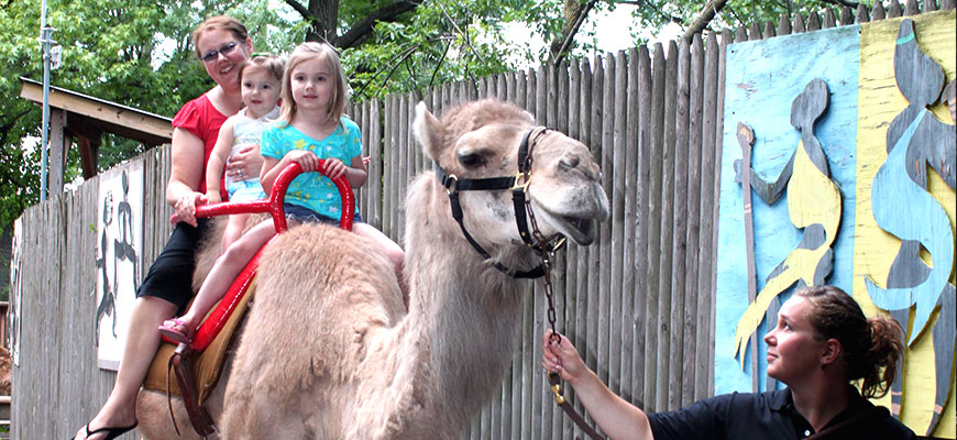 Camel Rides at the Louisville Zoo