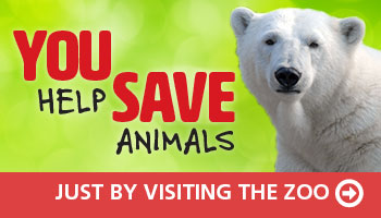 You Help Save Animals just by visiting the Zoo - Click here for more information