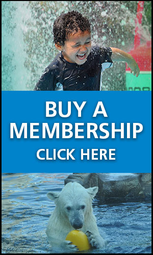 Buy a membership - Click here